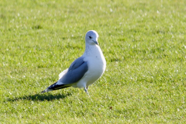 Landscapes, gulls, work