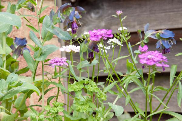 Results of Gardening